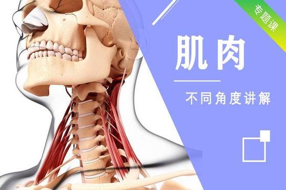 素描頭像視頻教程之頭骨肌肉講解