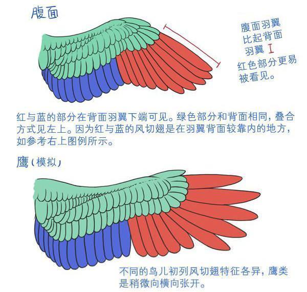 翅膀怎么畫,看完就會